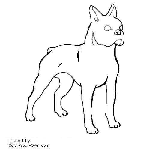 boston terrier coloring page boston terrier dog coloring page terrier coloring page boston