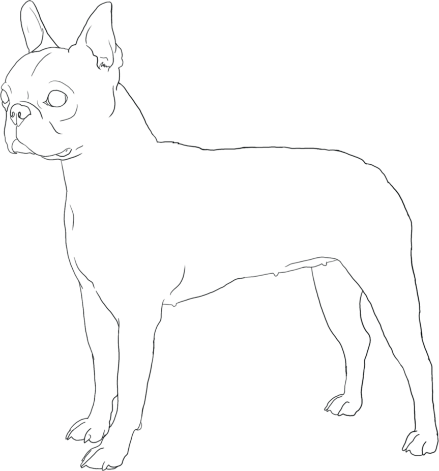 boston terrier coloring page boston terrier printable dog coloring page geometric coloring terrier page boston