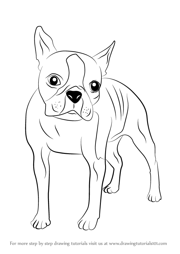 boston terrier coloring page dog breed coloring pages hubpages coloring boston page terrier