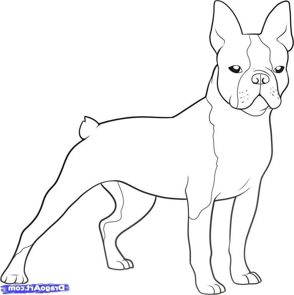 boston terrier coloring page french bulldog coloring page crayon action coloring pages page terrier boston coloring