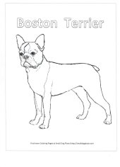 boston terrier coloring page learn how to draw a boston terrier dogs step by step page coloring boston terrier