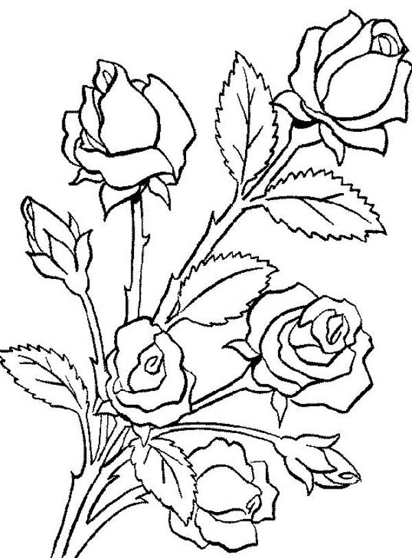 bouquet of roses coloring pages flower coloring pages pages coloring of roses bouquet