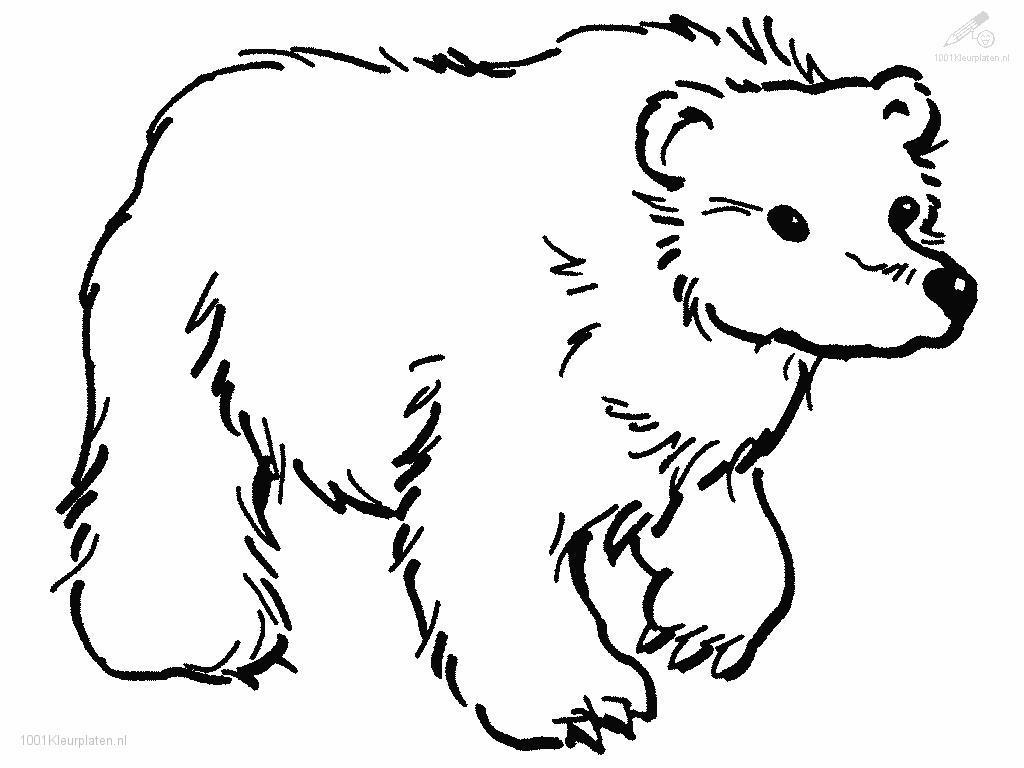 brown bear coloring pages printable brown bear brown bear what do you see coloring pages brown bear pages coloring printable