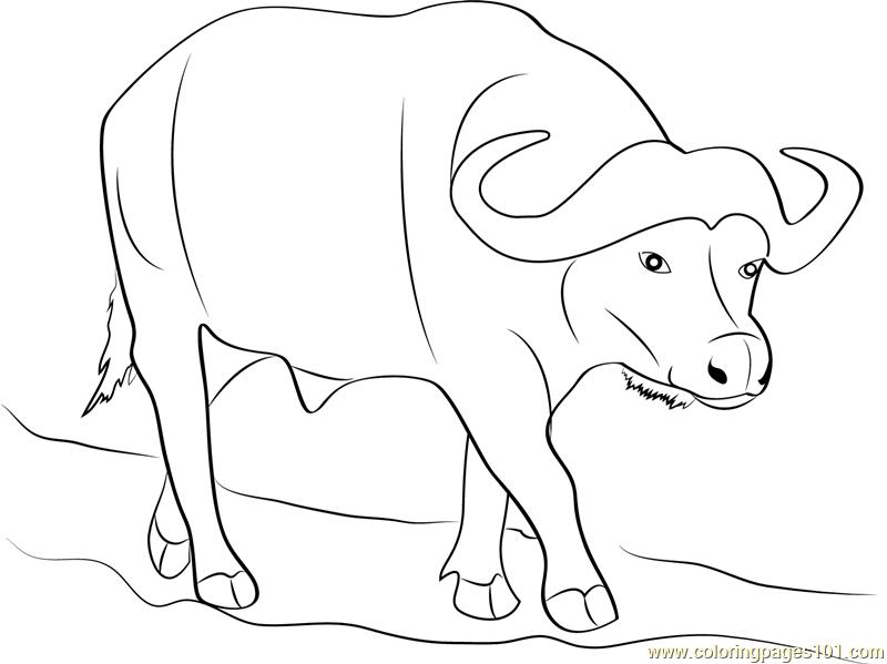 buffalo coloring sheet buffalo line drawing at getdrawingscom free for buffalo coloring sheet