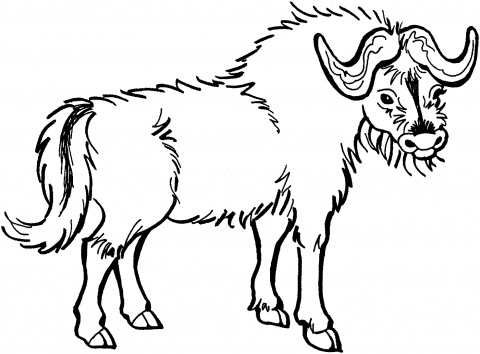 buffalo coloring sheet cape buffalo coloring page buffalo coloring sheet