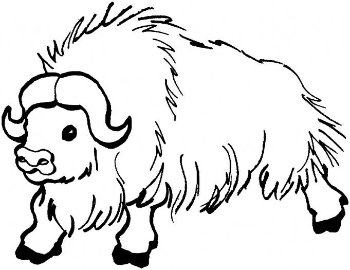 buffalo coloring sheet free buffalo and bison coloring pages buffalo coloring sheet 1 1