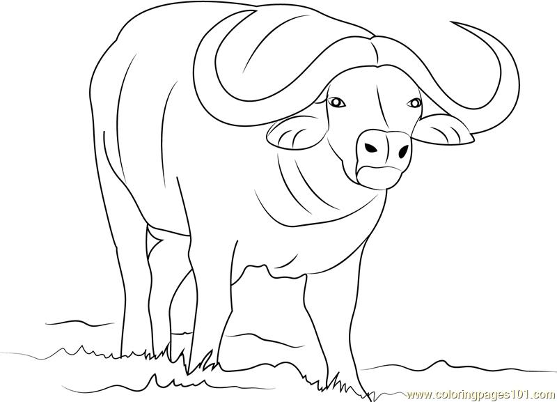 buffalo coloring sheet free buffalo and bison coloring pages buffalo sheet coloring
