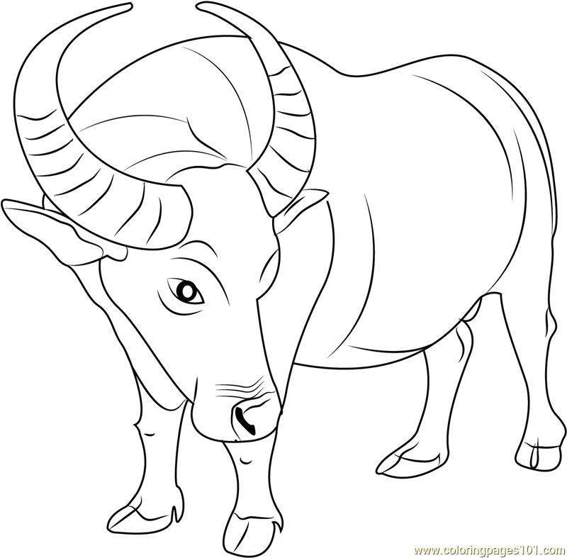 buffalo coloring sheet free buffalo and bison coloring pages coloring sheet buffalo