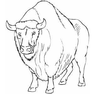 buffalo coloring sheet wild animal quot buffalo quot coloring sheet for drawing coloring sheet buffalo