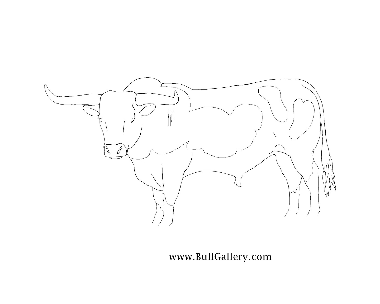 bull riding coloring pages rodeo cowboy bull riding coloring page free printable coloring pages bull riding