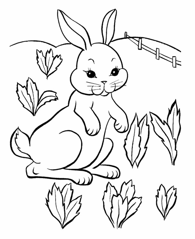 bunny coloring pictures bunny coloring pages best coloring pages for kids coloring bunny pictures 1 1