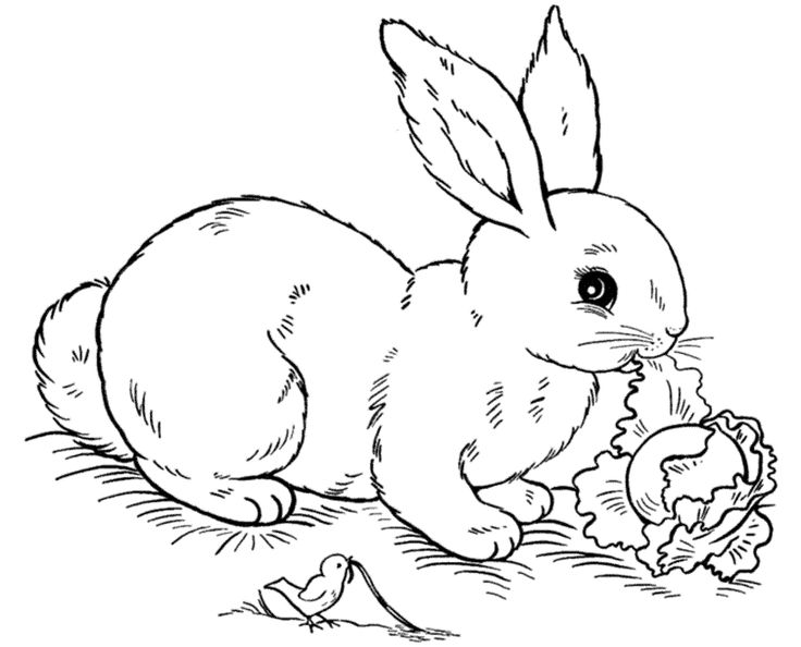 bunny pictures to color cute coloring pages at getdrawingscom free for personal to color bunny pictures