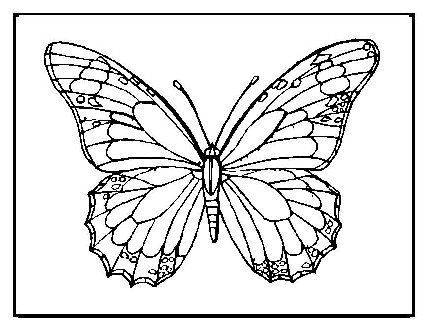 butterflies to color butterfly coloring pages butterflies color to