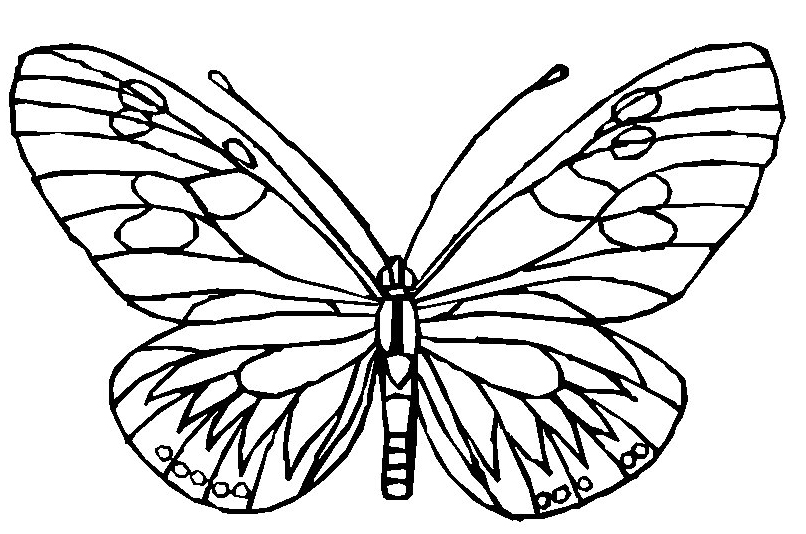 butterflies to color butterfly coloring pages learn to coloring butterflies to color