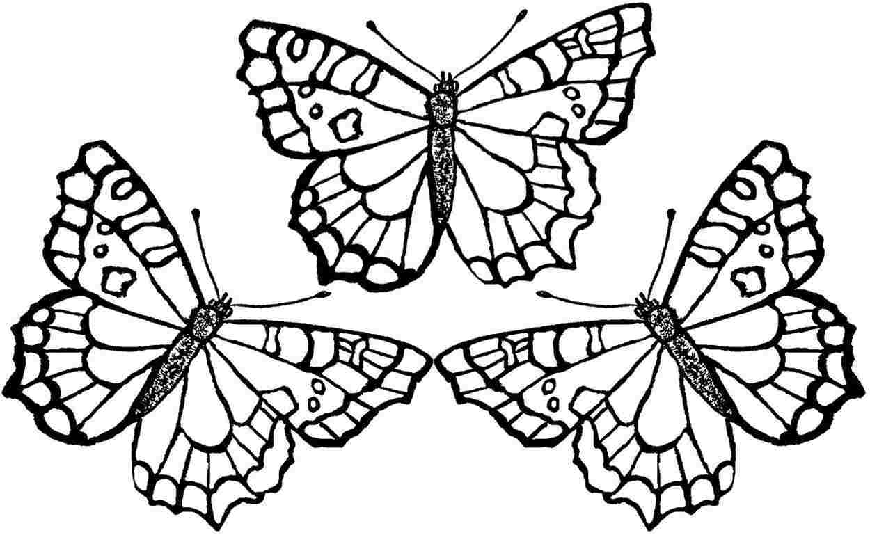 butterflies to color simple butterfly coloring pages getcoloringpagescom to color butterflies