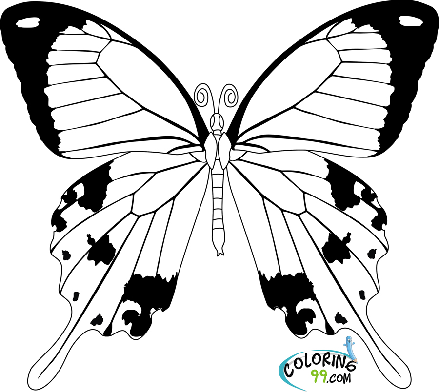 butterfly color sheets butterfly coloring pages butterfly sheets color