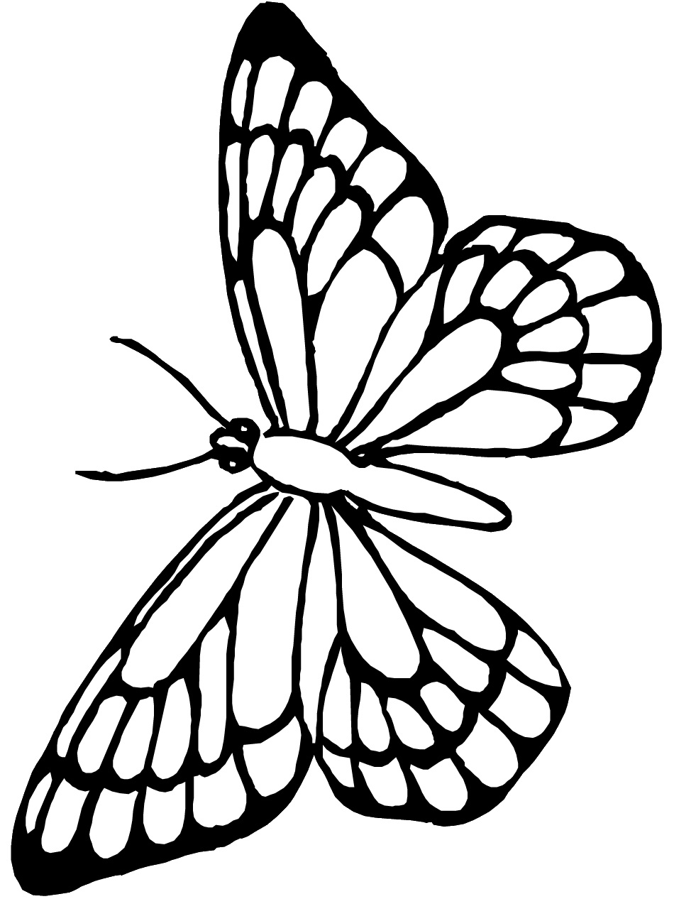 butterfly pictures to color butterfly coloring pages coloringpages1001com pictures color to butterfly