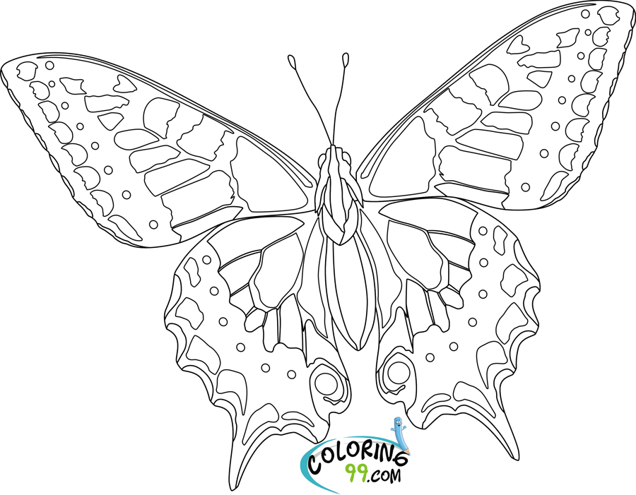 butterfly pictures to color butterfly coloring pages team colors pictures color to butterfly