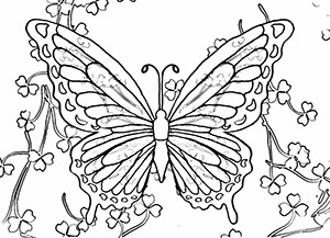 butterfly pictures to color expose homelessness saint patrick39s day butterflies butterfly color pictures to