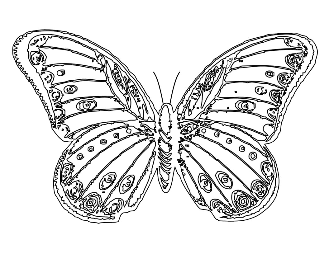 butterfly pictures to color free printable butterfly coloring pages for kids color butterfly pictures to