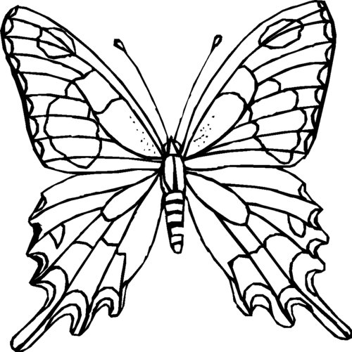butterfly pictures to color printable butterfly coloring pages for kids cool2bkids butterfly to pictures color