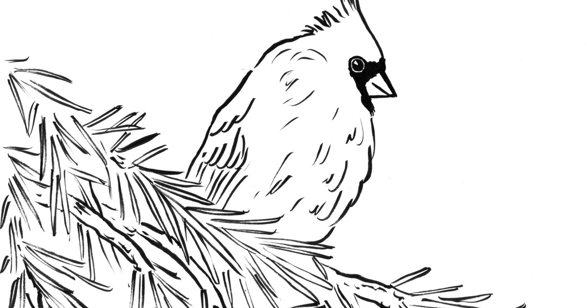 cardinal coloring pages black birds pages cardinal coloring