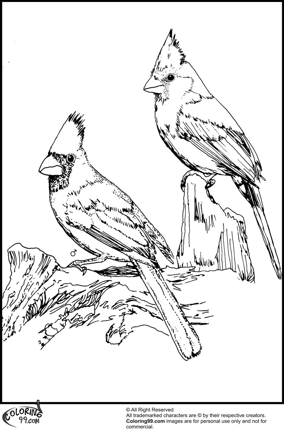 cardinal coloring pages cardinal coloring page pages cardinal coloring