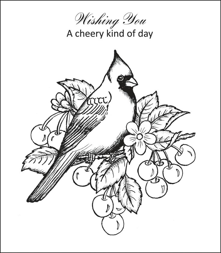 cardinal coloring pages clip art tree coloring pages cardnle printable coloring pages coloring cardinal