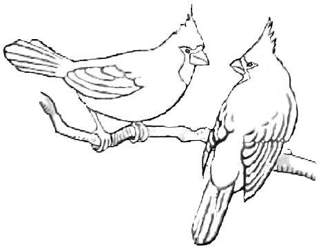cardinal coloring pages pin by mike graham on rock painting bird drawings bird coloring pages cardinal