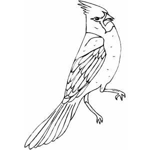 cardinal coloring pages red cardinals coloring page free printable coloring pages cardinal pages coloring