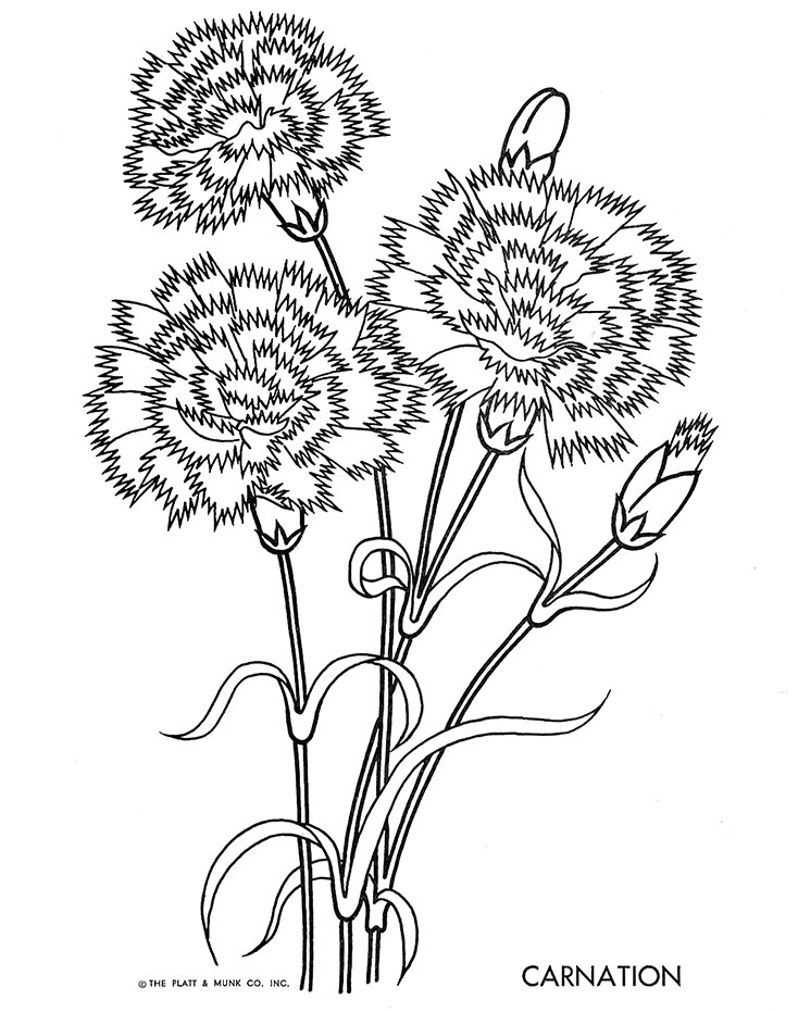 carnation coloring page beautiful printable flowers coloring pages page coloring carnation