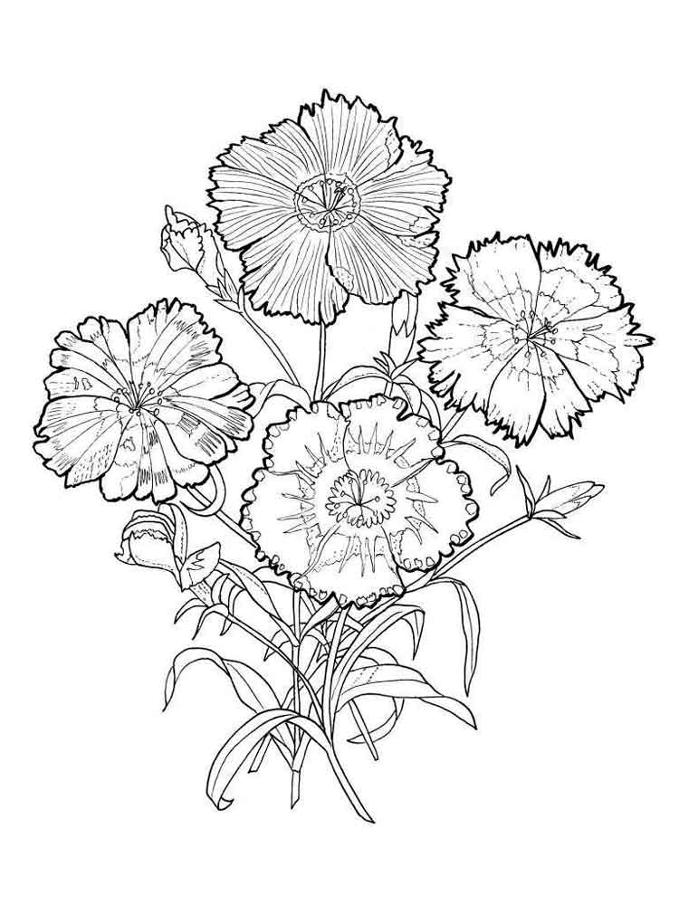 carnation coloring page beccy39s place october 2011 page coloring carnation