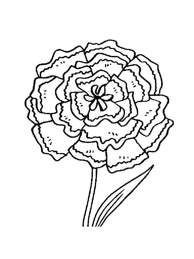 carnation coloring page carnation birth flower coloring page download free page carnation coloring