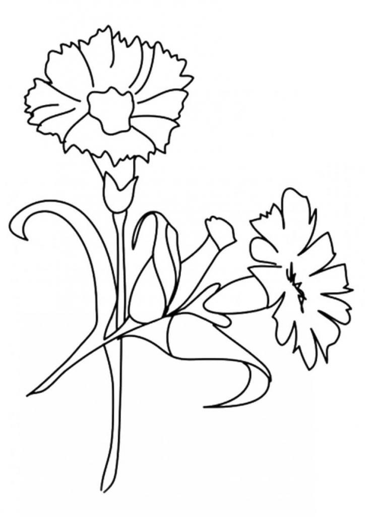 carnation coloring page carnation coloring pages hellokidscom page coloring carnation