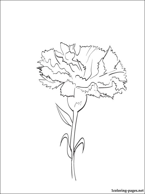 carnation coloring page carnation coloring pages to download and print for free coloring page carnation