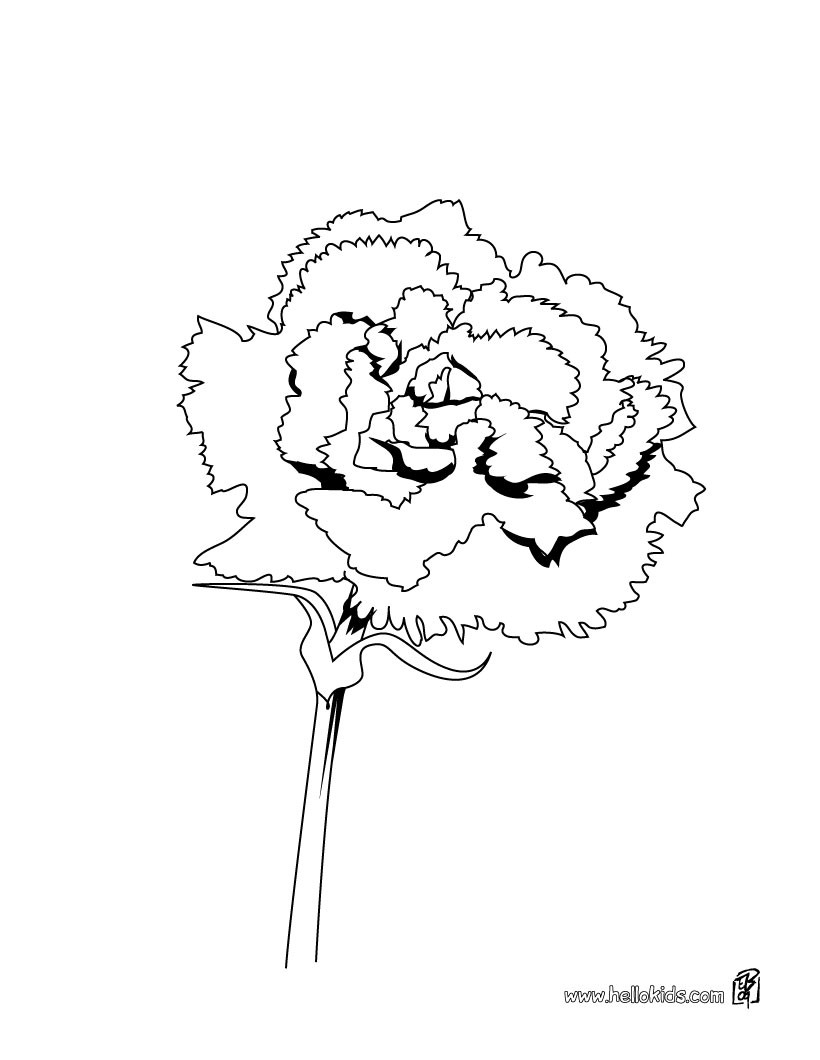 carnation coloring page carnation flower coloring pages download and print carnation page coloring