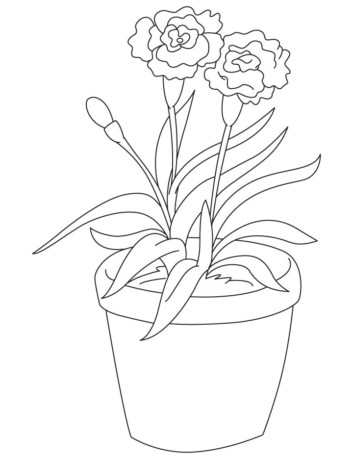 carnation coloring page carnation flower coloring pages download and print coloring carnation page