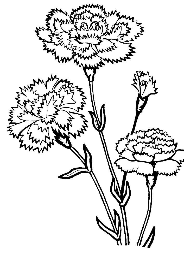 carnation coloring page carnation flower coloring pages download and print coloring page carnation