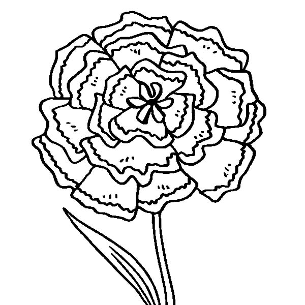 carnation coloring page carnation flower coloring pages download and print page carnation coloring 1 1