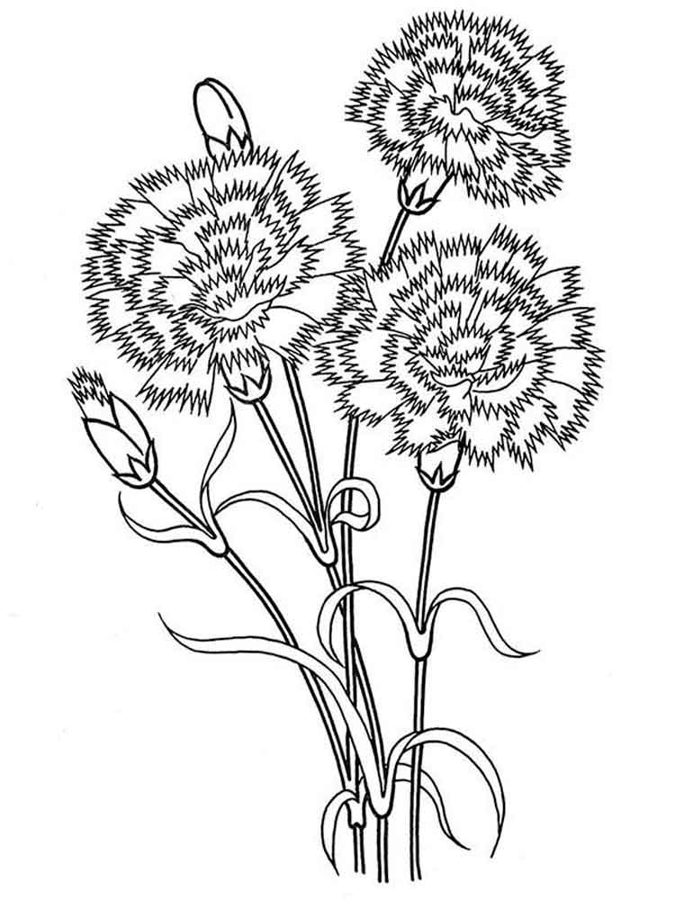 carnation coloring page carnation flower coloring pages download and print page coloring carnation