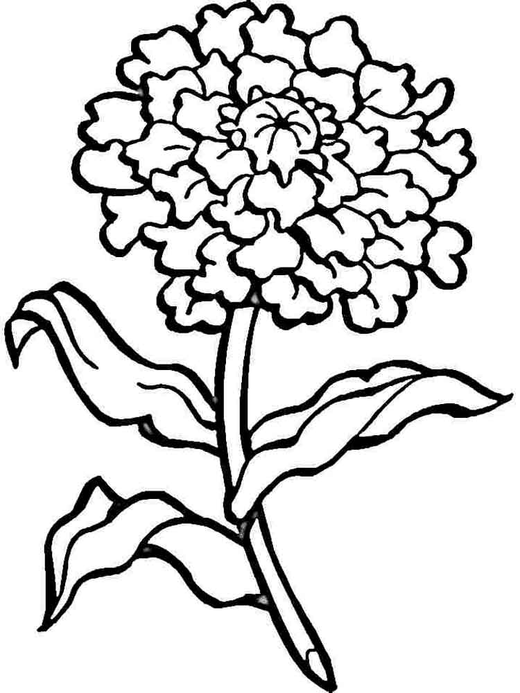 carnation coloring page carnation flowers coloring page free printable coloring coloring page carnation