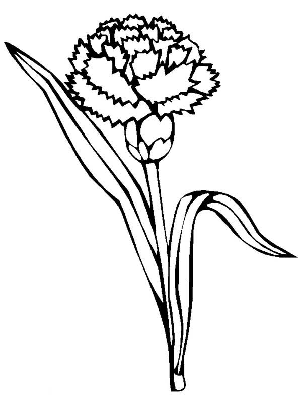 carnation coloring page carnation flowers coloring pages coloring book coloring carnation page