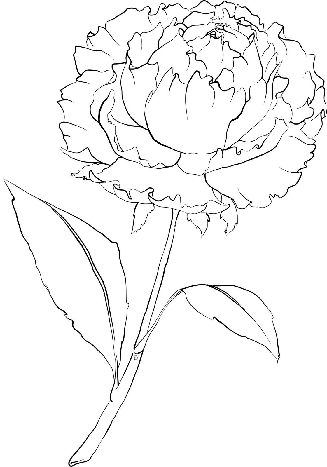carnation coloring page carnation flowers coloring pages printable free for carnation coloring page