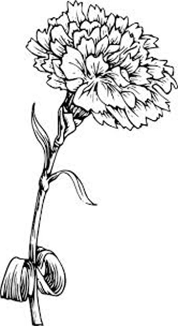 carnation coloring page flowers to color q is for quilter coloring page carnation