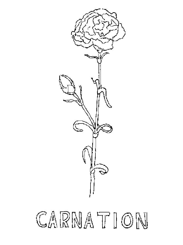 carnation coloring page red carnation and cardinal ohio state flower and brid coloring page carnation