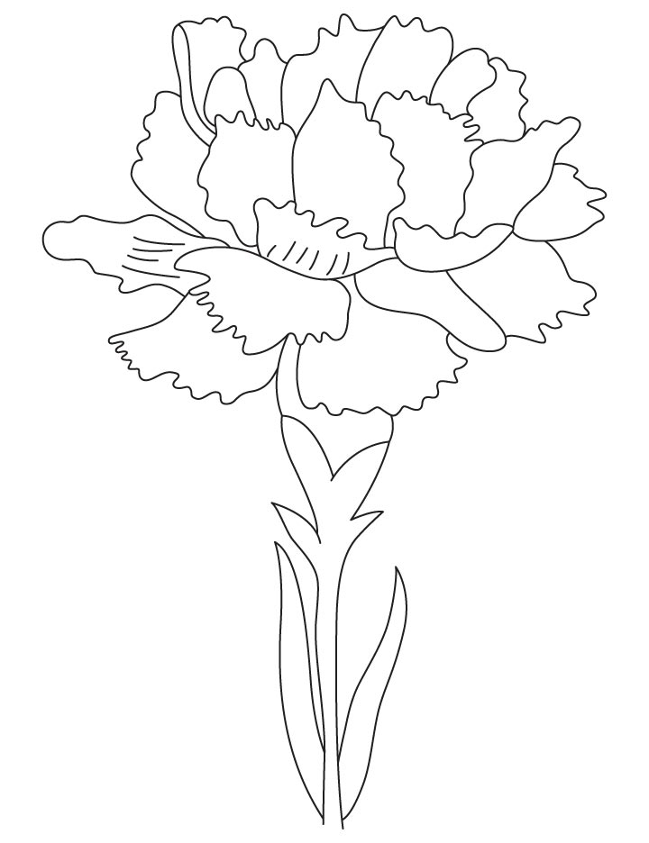 carnation coloring page the best free carnation drawing images download from 336 coloring carnation page