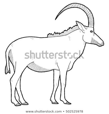 cartoon antelope best springbok illustrations royalty free vector graphics cartoon antelope