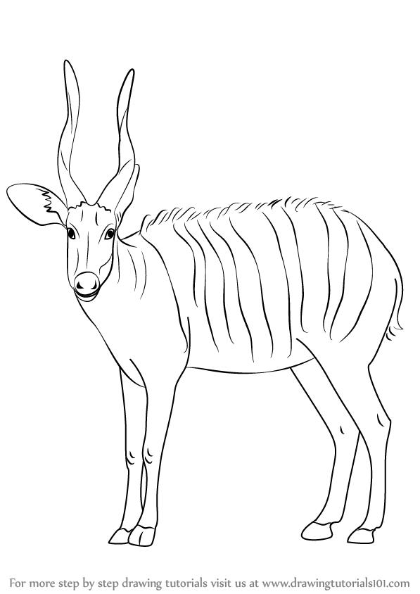 cartoon antelope learn how to draw a bongo antelope wild animals step by cartoon antelope