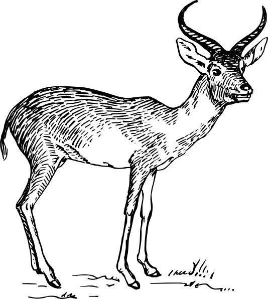 cartoon antelope savannah animal template collection cartoon antelope