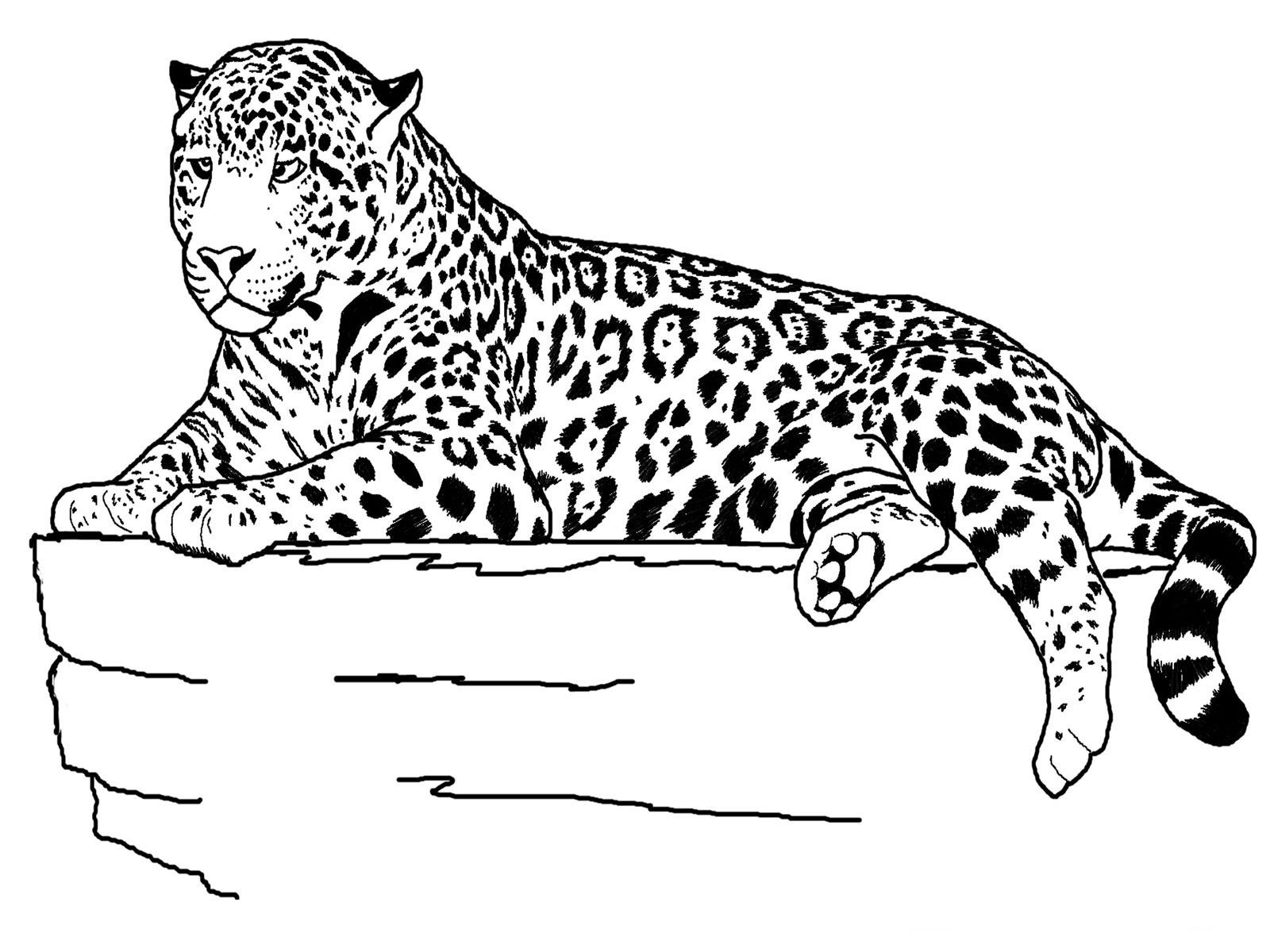 cheetah colouring page cheetah coloring page free printable coloring pages cheetah colouring page